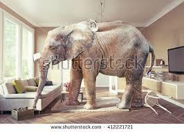 elephant living room big elephant case beer living room stock photo 412221721 shutterstock