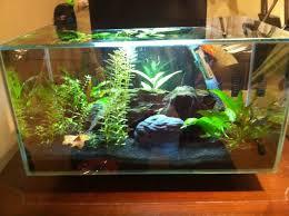 Betta Fish Decorations 835 Best Betta Fish Tanks U0026 Fish Tank Decorations Images On