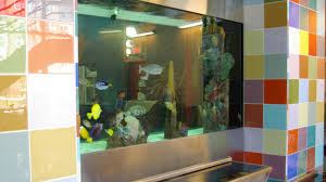 chicago home decor stores chicago custom aquariums fish tank company aquarium design for