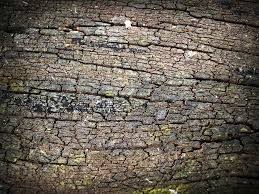 abstract wood free photo bark abstract wood background tree skin pine max pixel