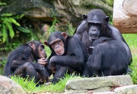 bentley orangutan zoo tycoon cheats codes faqs and hints for pc