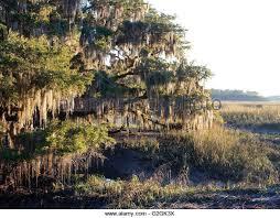 South Carolina landscapes images South carolina landscape stock photos south carolina landscape jpg