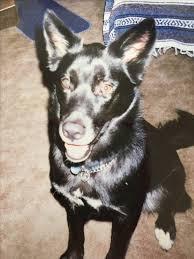 Dog Walker Resume Best 22 Elegant Image Pet Sitter Resume