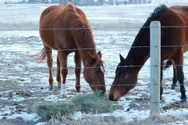 How Does An Outdoor Faucet Work Homesteady Managing Homestead Livestock In Winter U2022 The Prairie Homestead