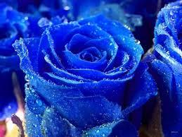 blue flower blue flower wallpaper flower wallpaper