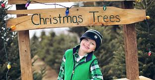20 tree farms in michigan that have perfect christmas trees for