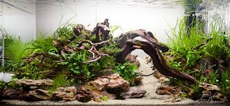 aquascaping layouts with stone and driftwood stu s 90x45x45 dragon stone scape aquascaping world forum