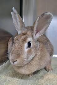 adopt a bunny for valentine u0027s day at aspca adoption drive ny