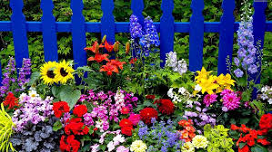 trendy inspiration flower gardening for beginners innovative ideas