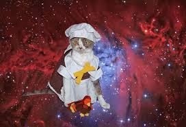 cats in space thanksgiving gif wifflegif