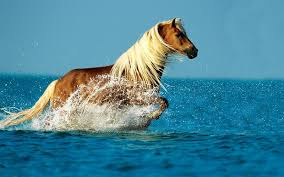 letest and best horse animals hd wallpapers download animals