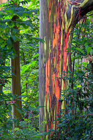 nature oddity rainbow tree wafflesatnoon
