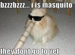 Dog Funny Meme - dog mosquito funny meme funny memes