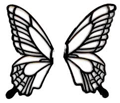 drawn butterfly butterfly wing pencil and in color drawn