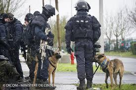 belgian shepherd special forces fa6 jpg 1 024 682 pixels gign gipn raid cos pinterest