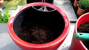 how to use the lechuza self watering planters with ian from our