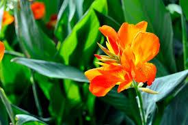 Heat Resistant Plants 14 Of The Best Plants For Your Drought Tolerant Garden Bob Vila