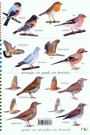 Backyard Bird Sanctuary by Bird Identification Images Reverse Search Picture With Terrific
