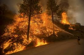 How To Get Wildfire Cases Fast by At Least 1 Dead In