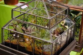 terrarium in the house fallcreekonline org