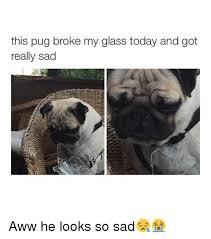 Sad Pug Meme - this pug broke my glass today and got really sad aww he looks so sad