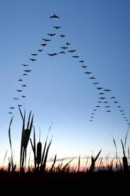 Waterfowl Migration Map Best 20 Duck Migration Ideas On Pinterest Meaning Of Freak Out