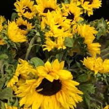 florist st louis harold s wholesale florist florists 2755 lasalle st the gate