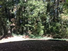 tree removal marietta 770 882 7742 free estimates marietta