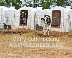 Calf Hutches For Sale Dairy Calf Housing