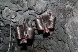 welcome to the bat cave dickinson county conservation board