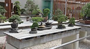 bill jumps a broad part 4 u2013 valavanis bonsai blog