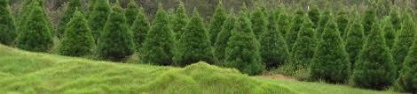christmas tree farming business plan christmas lights decoration