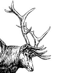 elk head clip art at clker com vector clip art online royalty