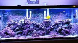 current usa orbit marine aquarium led light tank update orbit marine led youtube
