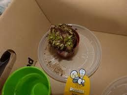petites mouches cuisine petits moucherons suite on a des moucherons qui adorent chercher
