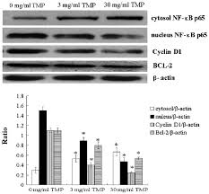tmp tetramethylpyrazine inhibits osteosarcoma cell proliferation via