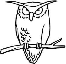 barred owl clipart black and white pencil and in color barred