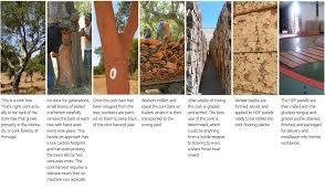 why cork usfloors