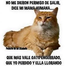 imagenes de gatitos sin frases 45 imágenes de gatos y perros con frases chistosas y divertidas