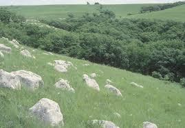 grassland native plants kansas native plants archives dyck arboretum