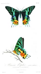 186 best cre8ive digital butterflies u0026 insects images on