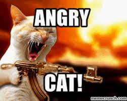 Kitty Meme Generator - angry cat meme generator find make share gfycat gifs