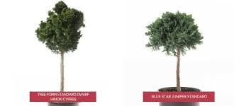 mini trees for every landscape plant your tree without worry
