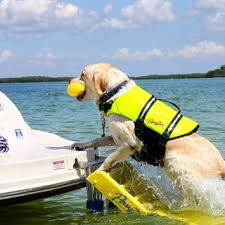 shop for pawz pet doggy boat ladder get free delivery at