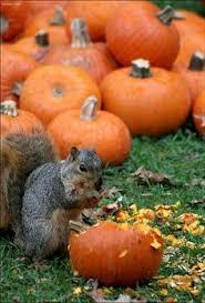 halloween season animals pinterest bunnies autumn and