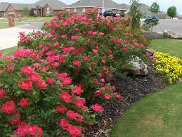 Flower Garden Ideas Beginners by Appmon