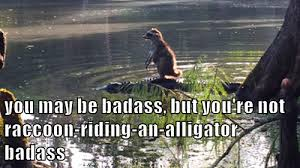Alligator Memes - you may be badass but you re not raccoon riding an alligator