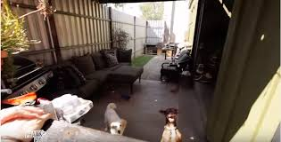 garage dog kennel woman living in a garage to care for rescue dogs gets the surprise