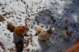 Colorado wildlife tours images Colorado discoveries 16 colorado wolf and wildlife center jpg