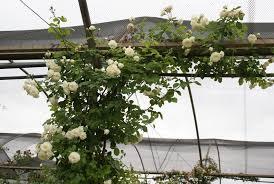 wedding garland ludwigs rosesludwigs roses